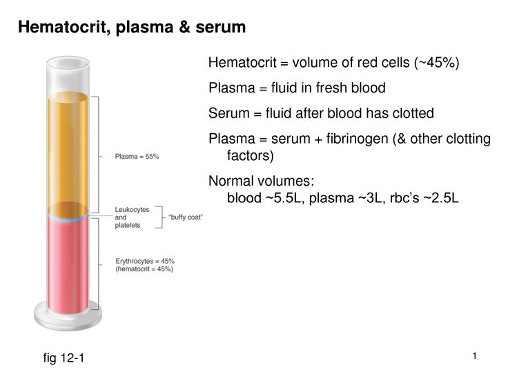 what is the relationship of serum to plasma