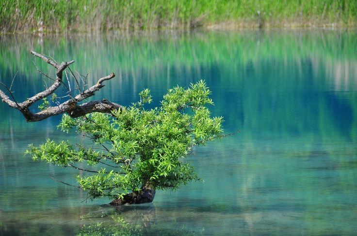 五色沼は色とりどりの湖が見られる絶景スポット! - Find Travel