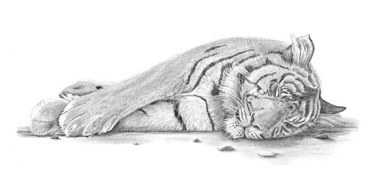 """Beautiful Slumber"" Pencil, 2010 Original Sold. Prints available"