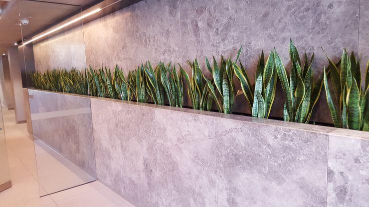 Canopy Apartments in Elwood | Wall Cladding  KAY STONE, AUSTRALIA