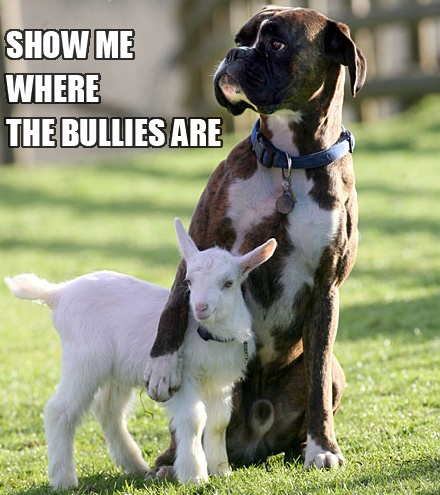 <3 lol: True Friends, Best Friends, Boxers Dogs, Big Brother, My Heart, Funny, Big Dogs, Baby Goats, Animal