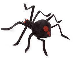 Image result for pająk czarna wdowa
