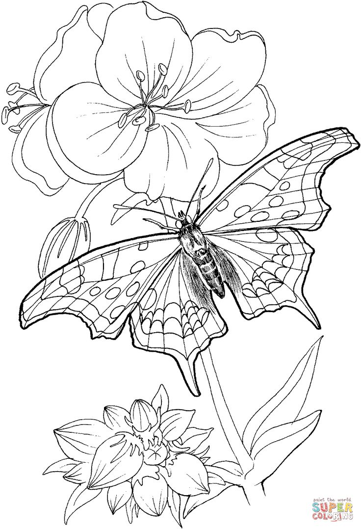 Butterfly and rainbow coloring pages - Butterfly Stands On A Plant Coloring Page Supercoloring Com