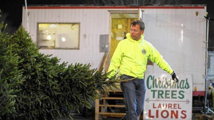 Laurel Lions Club's Christmas tree sale taking off.