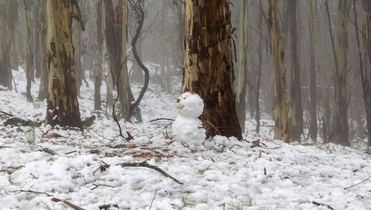 Couldn't resist sharing this frosty little guy from Orange NSW. More fabulous snow pics at I love Orange
