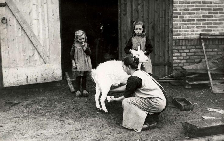 Nieuw gebouwde boerderij in het Drenthse Witteveen ipv de plaggenhutten. Een moeder melkt een pas verkregen door een kamerlid geschonken geit, die het begin van een kleinveestapel moet zijn. Twee meisjes op klompen kijken toe. Nederland, Witteveen (Drenthe), 1926. #Drente