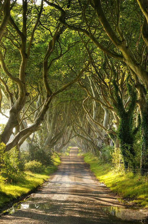 Walking down a tree-covered country lane