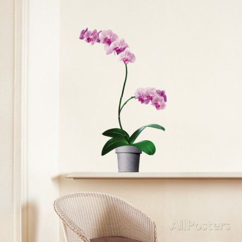 Orchids Wall Decal - at AllPosters.com.au