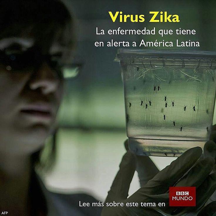 """@Regrann from @bbcmundo -  Una enfermedad ocasionada por un mosquito y similar al dengue se está propagando por América Latina.  La principal vía de contagio es la picadura de un mosquito """"Aedes aegypti"""" infectado el mismo que transmite el dengue y la chikungunya.  Sin embargo se ha detectado la presencia del virus en el semen y se han reportado casos de transmisión por vía sexual. También puede contagiarse por vía sanguínea pero se trata de medios de infección poco frecuentes. De dónde…"""