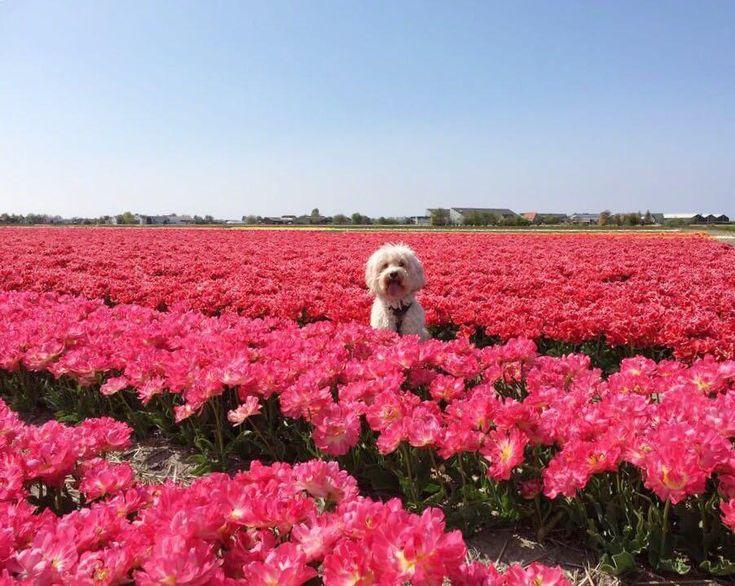 Hiding between the flowers http://ift.tt/2GQBmvB