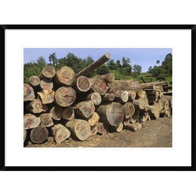 Global Gallery 'Timber at A Logging Area, Danum Valley Conservation Area, Borneo, Malaysia' Framed Photographic Print Size:
