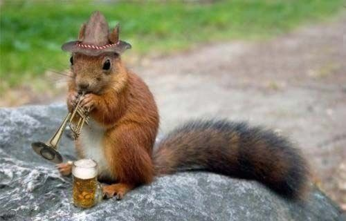 Squirrels in clothing | ... planted by squirrels who bury nuts and then forget where they hid them