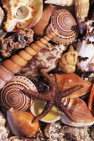 los niños podrán hacer un bodegón con estos elementos del mar.