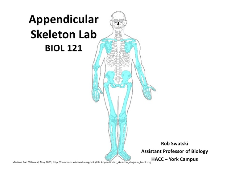 Quiz & Worksheet - Axial vs. Appendicular Skeleton | Study.com