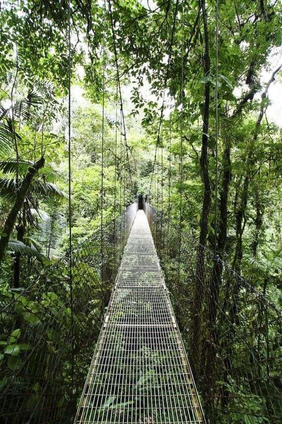 Arenal Hanging Bridges, Costa Rica.   A three kilometer hike through the Costa Rican rain forest. There are six suspension bridges, with the largest one at just under 100 meters long and 45 meters off the ground.