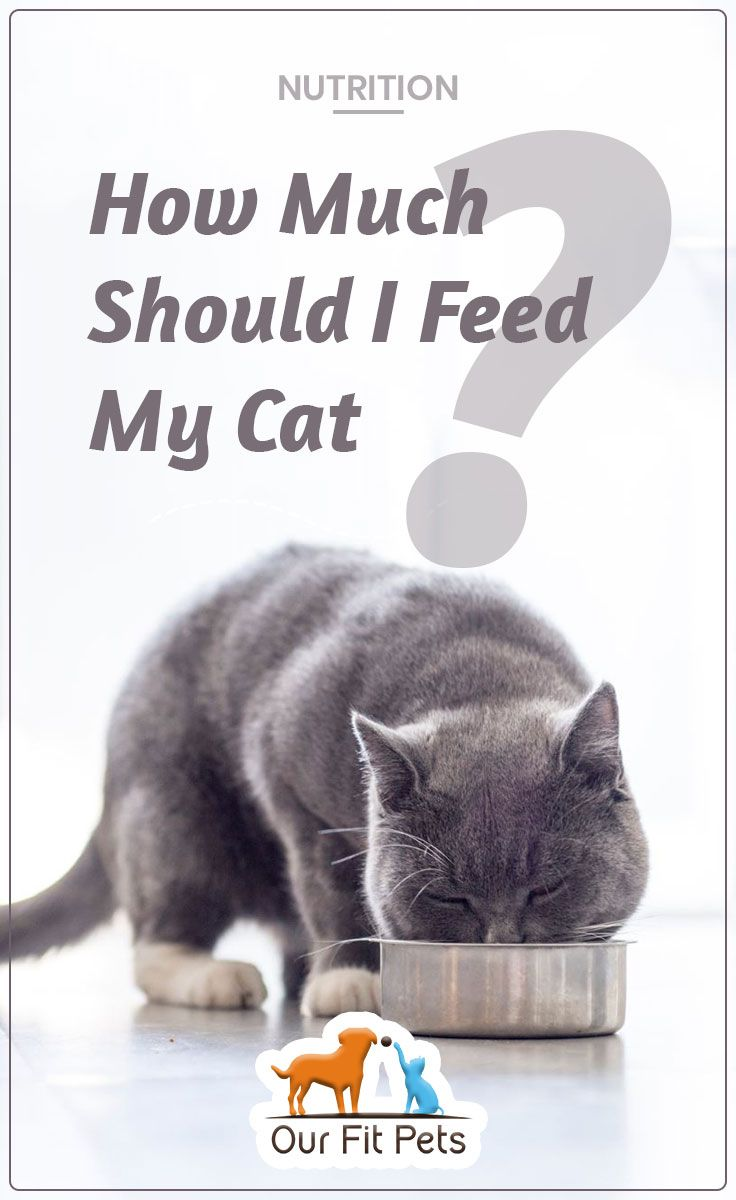 How Much Should I Feed My Cat Our Fit Pets Cats Cat Advice Pregnant Cat
