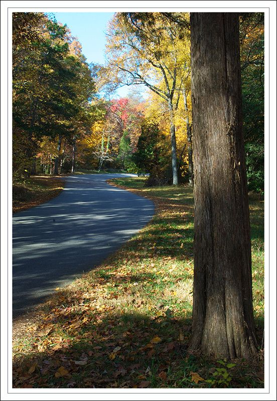 Back Road in Fredericksburg, Virginia  I love to just drive during the fall :)