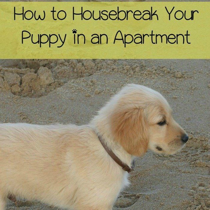 Dog Behavior Training To Housebreak Your Puppy Puppy Training