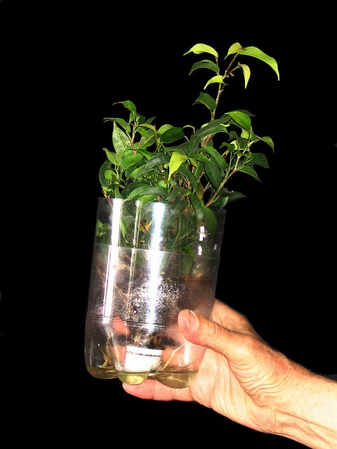 Repurposed Pop bottles - Sub Irrigated Planters