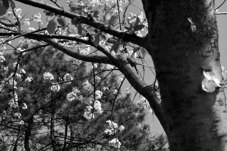 Charming Bucharest: B&W spring (II)   Titan Park