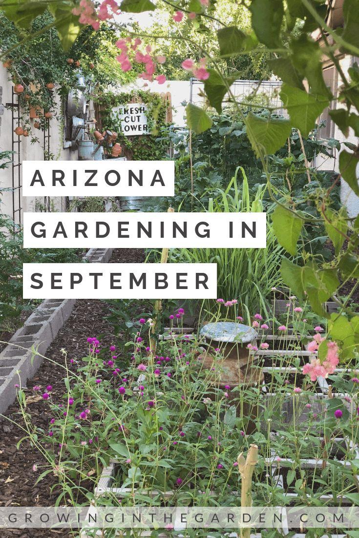 Arizona garden in september arizona gardening garden