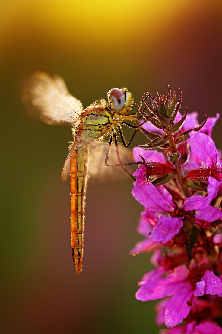 170 best the dragonfly the butterfly and the moth images on