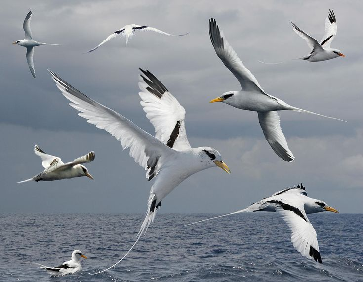 38 best Birds Sunbittern Kagu Tropicbirds images on Pinterest