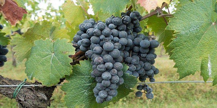 vinjournalen.se -  Vin Tips : Vintips: Varför inte prova en Appassimento?    Det står Appassimento på allt fler vinetiketter. Vad betyder det egentligen? Den italienska vinstilen Appassimento betyder kort att man har framställt vinet på druvor som har torkats under en längre tid innan de pressats. Den pressade saften fermenteras sedan, vilket betyder att druvorna förl... http://wp.me/p73gTR-3ga