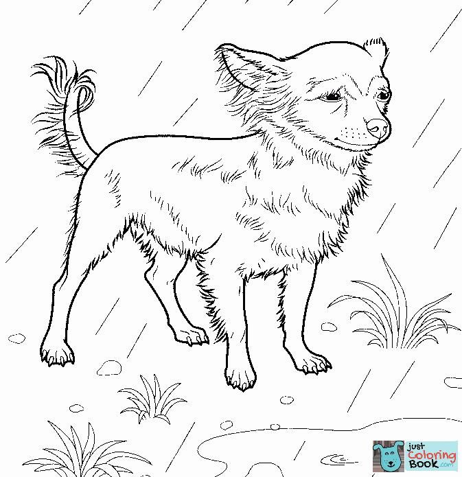 Chihuahua Coloring Page Free Printable Coloring Pages Pertaining To Chihuahua Dog Coloring Pages Printable For Dog Coloring Page Chihuahua Art Coloring Pages
