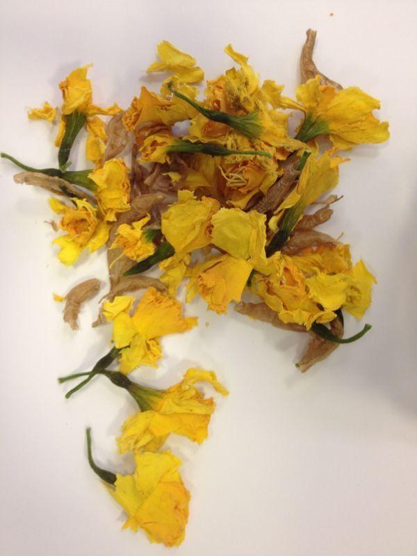 #giallomimosa Narcisi
