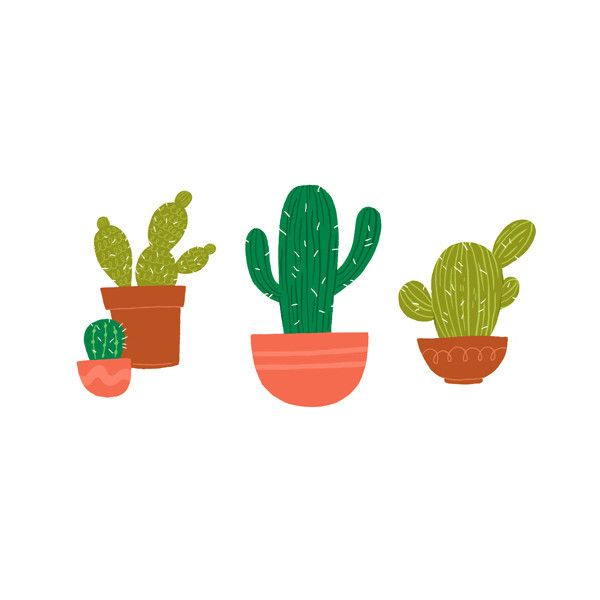 Who doesn't like a set of succulents? Alyssa Nassner's Cacti is a perfect prickly buddy.