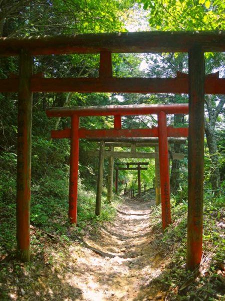 The Kumano Kodo Pilgrimage tour is a fully guided, Level 4 tour by Walk Japan. A 9 day, 8 night tour starting in Osaka and finishing in Ise.