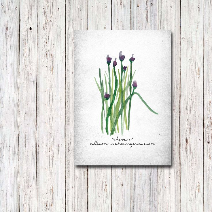 Chives Art Print with Scientific Name, Botanical, Kitchen Art Decor, Botanical Herb Art, Printable - INSTANT DOWNLOAD - 5x7 Inches by CraftivityDesigns on Etsy https://www.etsy.com/ca/listing/469682466/chives-art-print-with-scientific-name