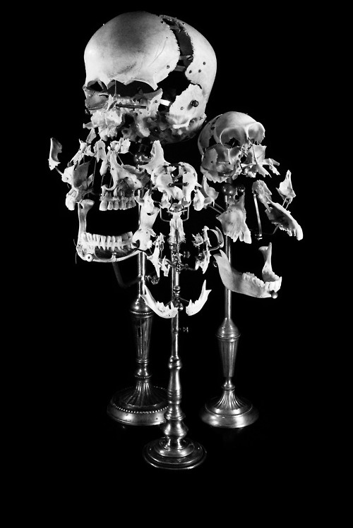 Exploded Human, Baboon,  Cat Skulls by Ryan Matthew .. Photo by Sergio Royzen