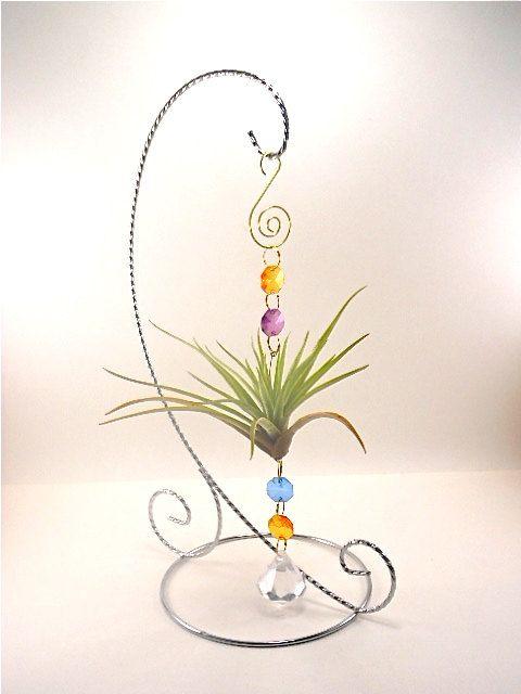 Air Plant Ornament- Unique Natural Gift  Multi Colored Air Plant  Ornament Gifts For Her Gifts under 20