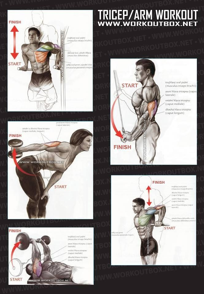 Triceps/Arms