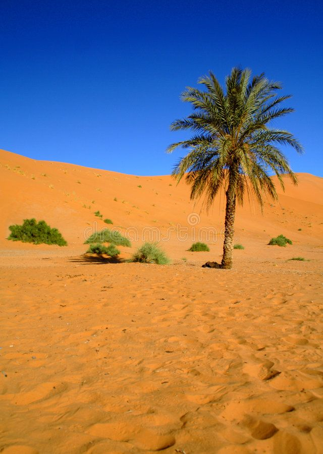 Desert dating maroc caydee denney john coughlin dating