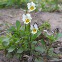 Tom Westeneng, symboliek van bloemen, bloemen als symbool, betekenis van bloemen