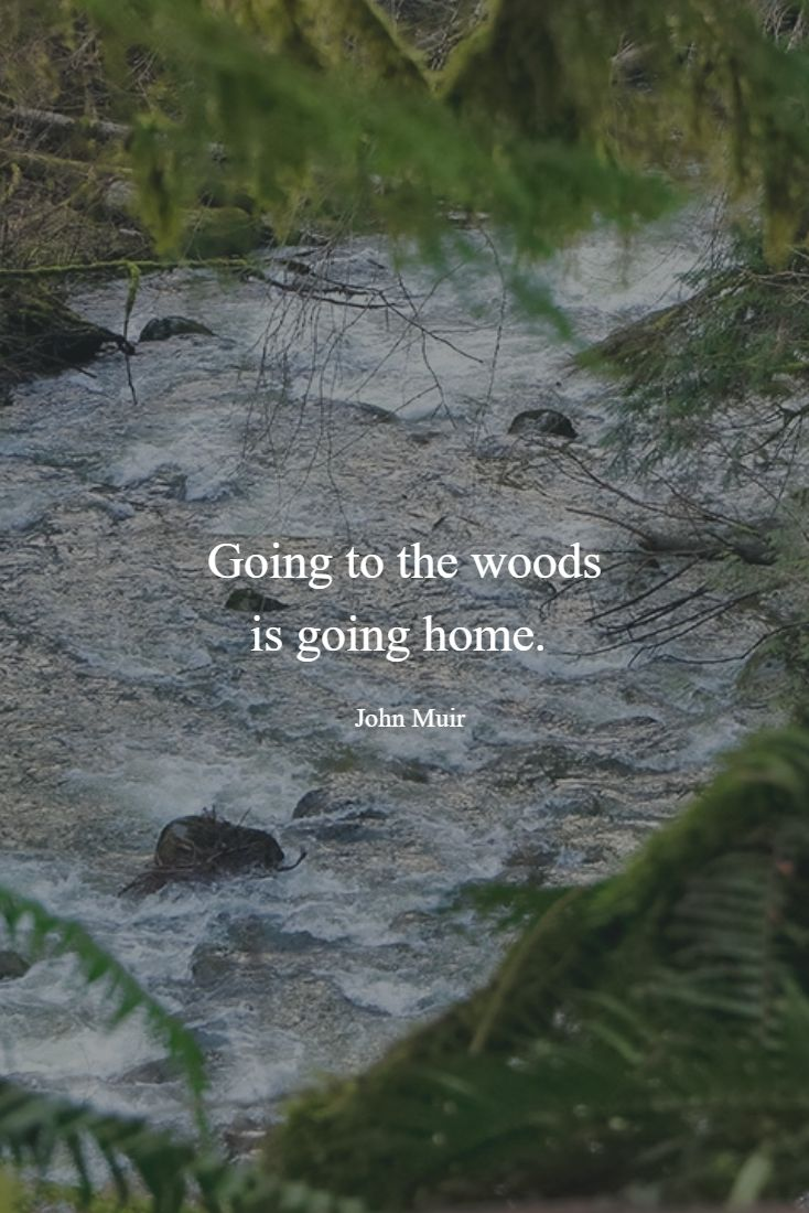 Going to the woods is going home. ~ John Muir  #quotes #muir #woods