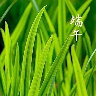seimeijinja 明日5月5日は端午(たんご)、五節句のひとつです。 「端」は、はじまりを意味することから、かつては月初の午(うま)の日をさしていました。 「午」は五(ご)の字に通じることから、のちに五が重なる五月五日のことを示すようになりました。  この日は菖蒲の節句とも言われ、菖蒲を軒先に飾ったり、菖蒲酒を飲み邪気を払っていたそうです。 菖蒲湯に浸かる風習もその名残のひとつです。  #seimeijinja #kyoto #晴明神社 #京都 #端午 #節句  2017/05/04 05:20:09