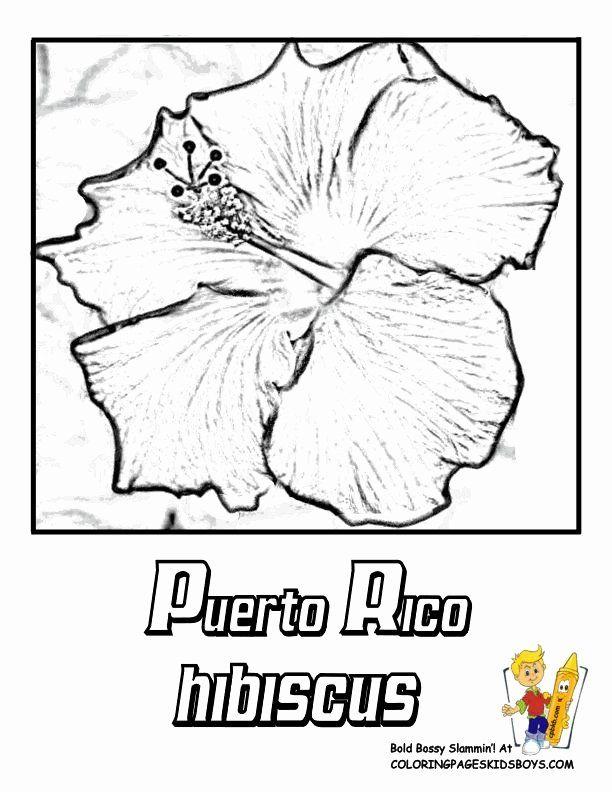 Puerto Rico Flag Coloring Page Unique 107 Best Images About Puerto Rico On Pinterest In 2020 Flag Coloring Pages Puerto Rico Art Coloring Pages