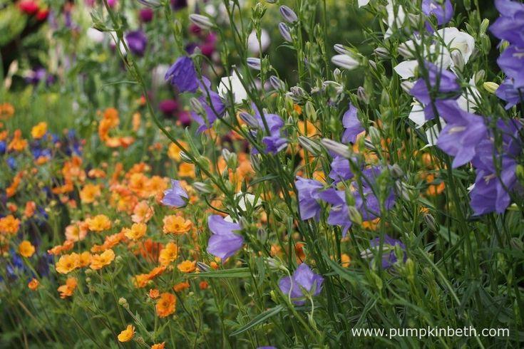 Chris Beardshaw and The Morgan Stanley Garden - Pumpkin Beth