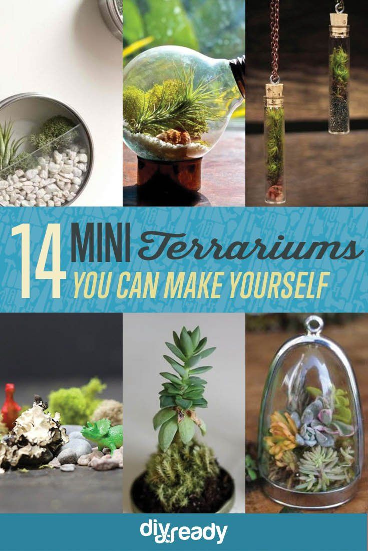 Pin By Janie Stone On Terrarium Ideas Terrarium Diy Terrarium Diy