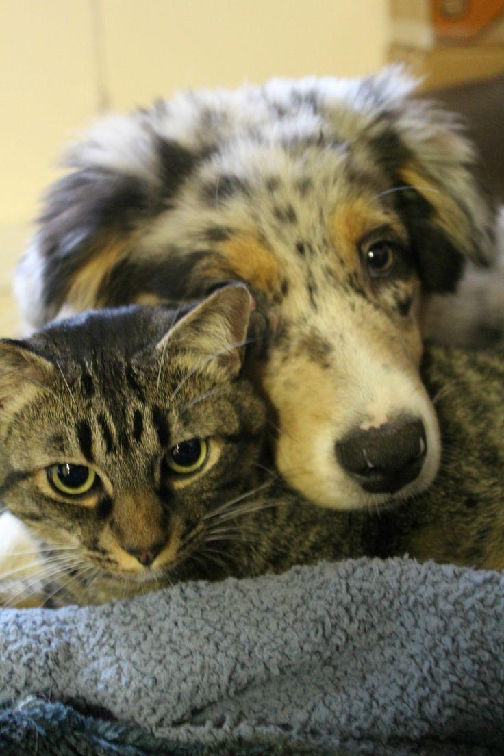Ein seltener Moment, in dem er nicht am Kopf der Katze kaut oder an ihrem Schwanz ruckt – Hunde …   – Adorable Animals
