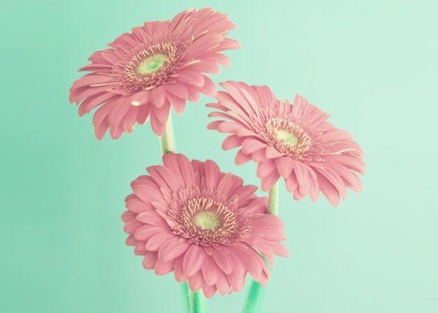 Πες μου το μήνα που γεννήθηκες να σου πω τι λουλούδι είσαι! Τι σημαίνει για το χαρακτήρα σου;