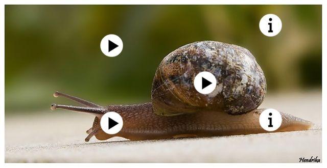 de huisjesslak by Juf Liesbet, klik op de rondjes en je wordt doorgelinkt naar filmpjees over dit onderwerp