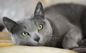 New Study Shows Cats are as Smart as Their Owners Already Knew | petMD