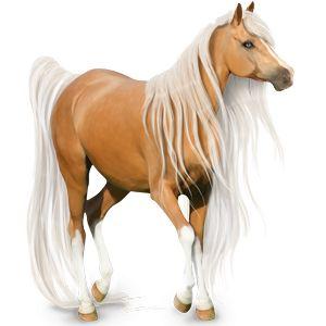 Jazdecký kôň Frízsky kôň čierny