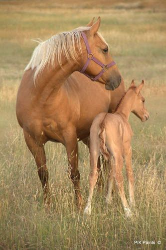 Gorgeous Palomino Mare and Pretty Dun Foal.