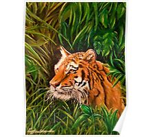 Tiger mania, Tiger obsession, Tiger addiction,  Poster